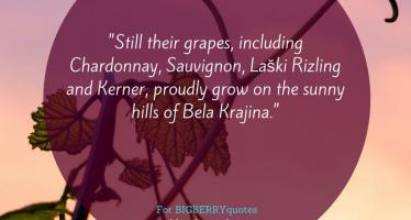 Grapes Proudly Grow on the Sunny Hills of Bela Krajina